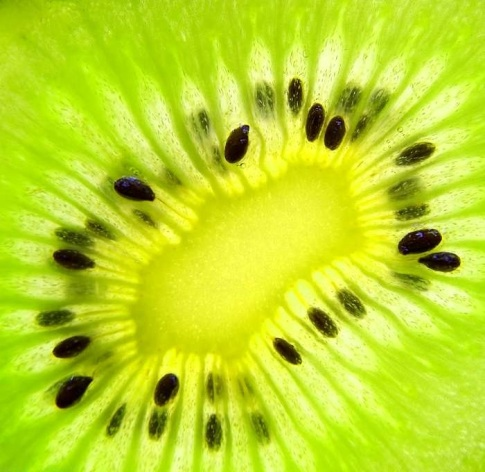 kiwi_slice