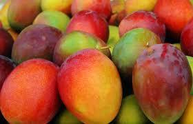 mangoes real