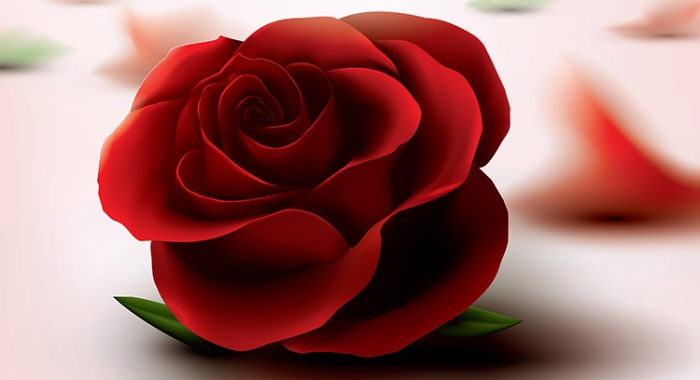 36965045-red-roses-images